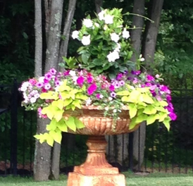 Planting A Large Urn Dells Daily Dish
