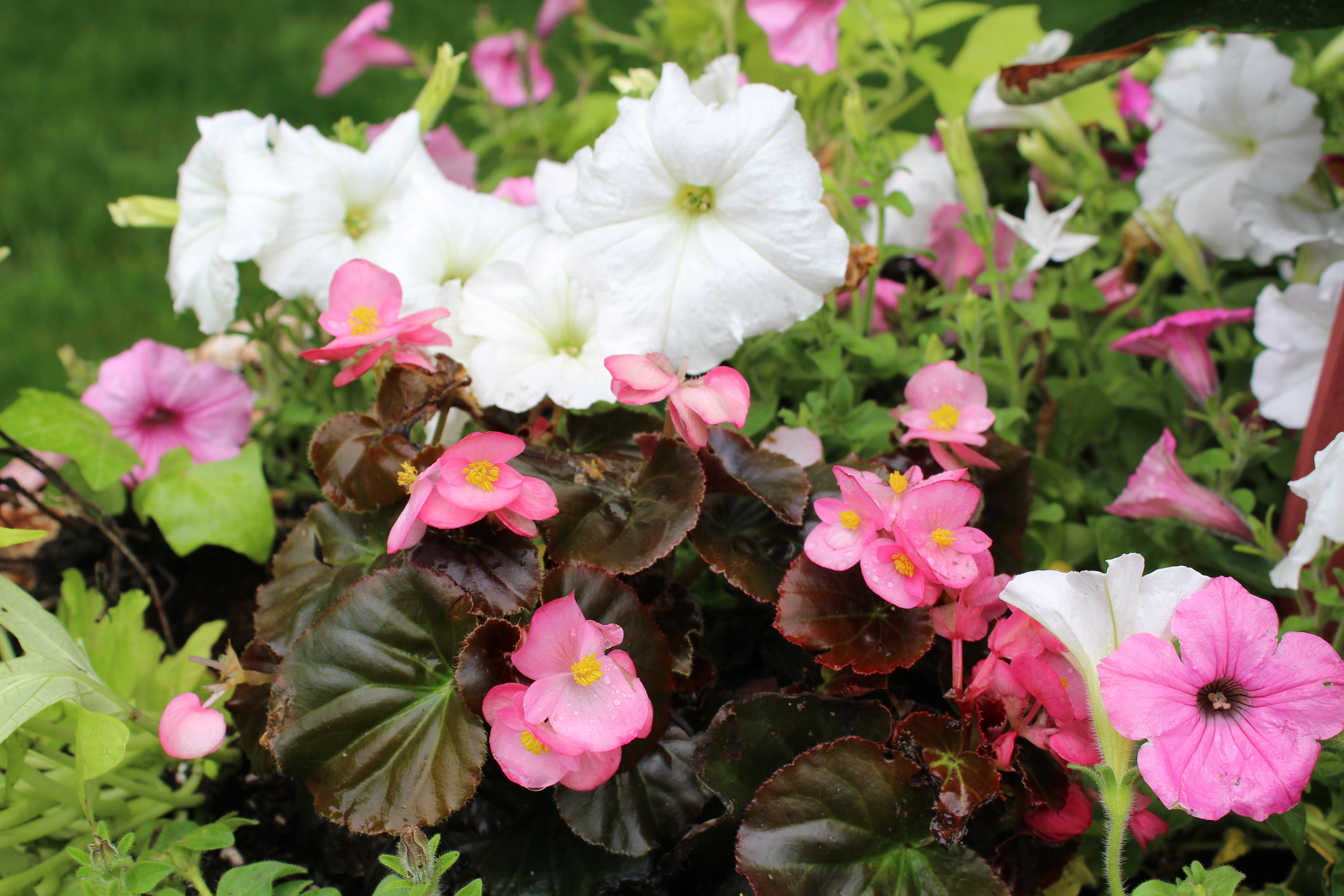 Planting Annuals In Urns Dells Daily Dish